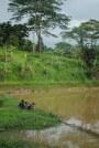 Pengecut Bimbang (dok klosetide)