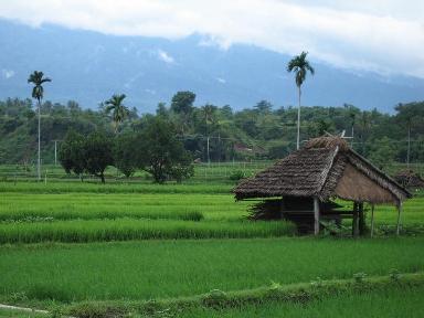Desa (dok mediamacarita dot blogspot dot com)