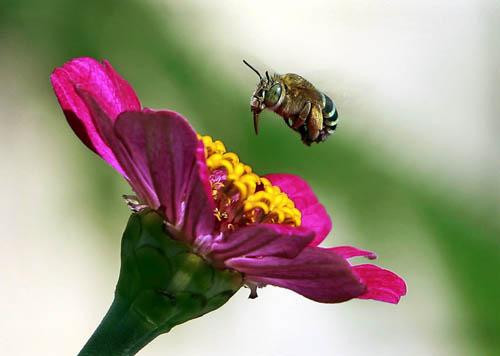 kumbang & kembang (dok google)